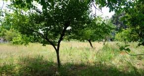 San Sisto terreno agricolo